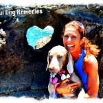Maui Dog Remedies Training