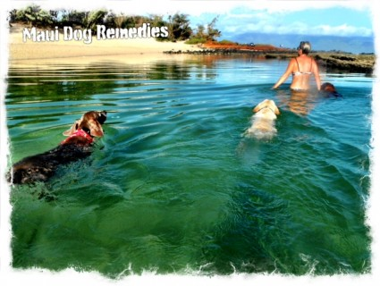 Maui Swimming Dogs